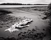 The creeping tide (LukeOlsen) Tags: usa water oregon river portland columbiariver sauvieisland lukeolsen
