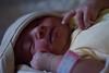 مولود جديد - New Baby (! FOX) Tags: canon eos fox 7d ahmad ahmed أحمد a7mad a7med احمد خاين خائن معاذ فوكس الخاين الخائن al5ain 5ain