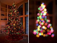 double take (Magalie L'Abb) Tags: christmas tree texas decoration decorating magnolia