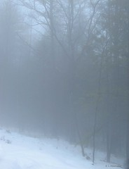 Fog (Woods Whisperer) Tags: road winter snow ice fog forest woods vermont snowstorm newengland blizzard