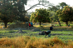 Birders & workers (mothclark62) Tags: africa people woman west field person rice paddy african farming birding working tourist fields gambia worker local farmer guide ricefield ricefields birder tilling the cultivating gambian abuko lamin