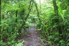 Costa Rica (joeksuey) Tags: birds costarica reserve santaelena monteverde cloudforest biological reservabiologicabosquenubosomonteverde