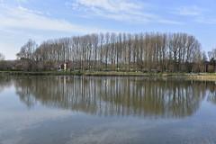 Peupliers dans les deux sens (Flikkersteph -4,000,000 views ,thank you!) Tags: park trees brussels reflection nature water pond anderlecht blueskyshadow