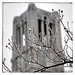 Ice forms on the trees surrounding the Belltower.