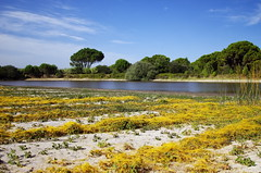 Paisagens secretas (Capturedbyhunter) Tags: 2 art portugal landscape pentax paisagem vale santarm fernando 24 f2 24mm marques fa k5 ribatejo coruche f20 caador zebro fajarda pentaxart