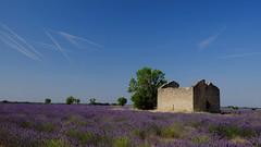 Et toujours en été ... *----+° (Titole) Tags: ruine ruin lavande lavender titole nicolefaton sky tracks stones field champ friendlychallenges challengegamewinner