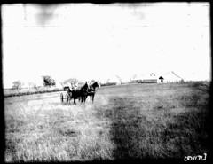 D1171 (rlpape) Tags: buggies horses farmscenes