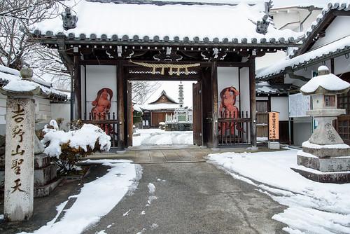 桜本坊1・Yoshino