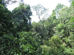 "Taman Negara <a style=""margin-left:10px; font-size:0.8em;"" href=""http://www.flickr.com/photos/83080376@N03/32647552494/"" target=""_blank"">@flickr</a>"