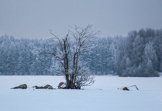 Frosty Tree In Cold Landscape