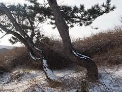 P2120142 (jjs-51) Tags: wijkaanzee sneeuw winter