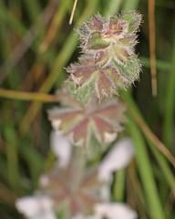 D174718A (RobHelfman) Tags: losangeles flowers kennethhahnstaterecreationarea