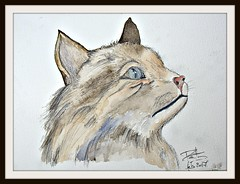 Celine (patrick.verstappen) Tags: painting painted watercolor cat pet animal lovely drawning drawing art paper ipernity ipiccy image imagine inspiration inkt yahoo gingelom google belgium flickr facebook d7100 nikon celine