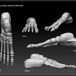 "Bones-of-the-foot <a style=""margin-left:10px; font-size:0.8em;"" href=""http://www.flickr.com/photos/95448010@N08/8756150660/"" target=""_blank"">@flickr</a>"