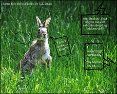 The brunt of many jokes... (blamstur) Tags: rabbit bunny grass animal hare joke cartoon