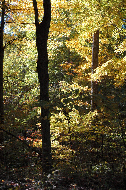 Hoosier National Forest - Waldrip Ridge - October 2005