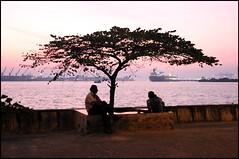 Tramonto Ernakulam albero