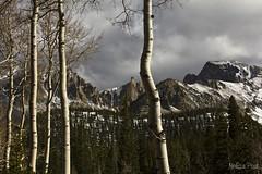 Alpine Majesty (San Francisco Gal) Tags: cloud mountain snow nature landscape nevada alpine aspen conifer greatbasinnationalpark mtwheeler vigilantphotographersunite vpu2 vpu3 vpu4 vpu5 vpu6 vpu7 vpu8 vpu9 vpu10