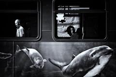 :: (. Jianwei .) Tags: street urban bus window vancouver dolphin candid sony oldman jianwei kemily cu0o0xawkdy3y2mq99