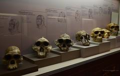 Museu Arqueolgic. Un llarg cam - DSC_4961e (antarc foto) Tags: barcelona 3 de nikon museu dia un catalunya nikkor agost montjuc 18105 cam danys 2013 llarg destiu milions d7000 darqueologia