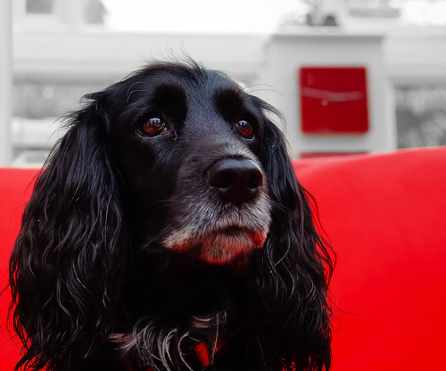 Ruby (Explored) by Bev Goodwin, on Flickr