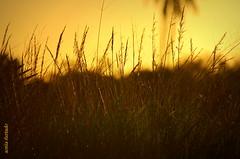 Quarta-sunset (sonia furtado) Tags: sunset brazil brasil contraluz ne rn pds cearámirim quartasunset nanaturezainnature