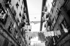 (_Massimo_) Tags: blackandwhite bw italy italia liguria genoa genova laundry clothesline biancoenero bucato pannistesi massimostrazzeri ziomamo