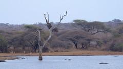 Kruger National Park (José Rambaud) Tags: wild naturaleza nature southafrica wildlife afrika krugernationalpark mpumalanga kruger suidafrika sudáfrica