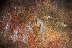 2013_01_19_AWT_AUSTRALIA_DSC5124 (herr loeffler) Tags: people art person hand australia human aborigine minority westernaustralia humanbeing humans humanbeings oceania ethnicminority cavepaintings hyden ethnicgroup