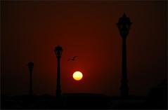 day done (Coand) Tags: light sunset red sky black colour nature silhouette bronze dark mexico lowlight locals village zoom dusk streetlights flight sharp crop manual vignetting f8 seabird freezemotion 18200mmf3556gvr d80 1xp