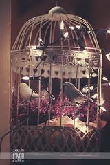 . (Paco Jareo Zafra) Tags: christmas valencia birds shop shopping jaula navidad luces decoration el pjaros tienda navidades paco deco carmen decoracin 2013 jareo enjaulados