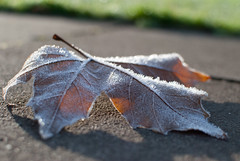 Winter-14 (dpanch_89) Tags: autumn winter shadow tree ice frozen leaf crystals bokeh dew freeze loughborough