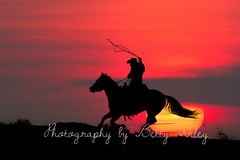 Sunset ride (betty wiley) Tags: sunset horses mountains cowboy silhouettes rope wyoming rider wrangler roping lasso