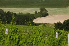 Vinastv Marcink (marcink) Tags: food vineyard bottle wine good south festivals best winery organic wineyards moravia vinice vinastv vinastv vina vina vinastvmarcink vyrobavina vinastvmarcink