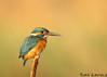 getting closer (BorisWorkshop) Tags: bird nature ngc taiwan npc commonkingfisher hunei mygearandme mygearandmepremium mygearandmebronze mygearandmesilver mygearandmegold sunrays5