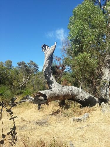 big old log