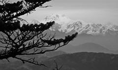 Himalaya, Sandakphu, Darjeeling, West bengal, India (Sougata2013) Tags: trees bw india mountain nature landscape nikon hill himalaya bengal darjeeling hilltop bangla westbengal sandakphu kanchenjunga himalayanrange sonarbangla kanchenjungarange