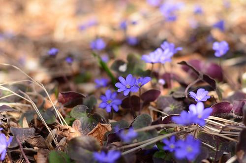 Violet magic
