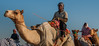 Deserts and Camels 131107 16_41_12 (Renzo Ottaviano) Tags: race al dubai desert united racing course emirates camel arab lorenzo races camels corrida emirate deserts uniti renzo unis arabi carrera corsa emirati unidos camellos chameaux árabes kamelrennen صحراء سباق arabes ottaviano camelos emiratos emirados vereinigte arabische cammelli emiratiarabiuniti émirats الهجن هجن سباقات المرموم marmoun