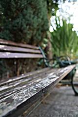 DSC03117 (weekend_vagabond) Tags: wood blackandwhite house bird window glass bench seat shed birdhouse cobweb pane hdr cobwebs