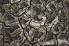 Mapa del futuro (Susie Palermo G) Tags: laguna seca sayula