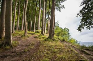 In den Wäldern der Rüganer Steilküste