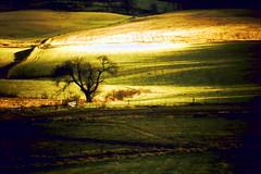 Lone tree. (artanglerPD) Tags: tree sunshine lone february feughside