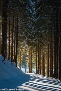 Unberührter Waldweg aufgenommen im Winterwald im Sauerland - Untouched forest path photographed in winter forest in Sauerland