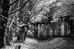 Beauty and the Beast.....(FEATURED ON EXPLORE) (Sue_Shaw) Tags: graffiti park lincolnshire canon canon80d blackandwhite monochrome art trees treeline canoneos urban