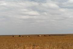 DSC06845_DxO_Bildgröße ändern (Jan Dunzweiler) Tags: afrika madagaskar fahrradreise radreise momotas africanbikers jandunzweiler horombe horombeplateau