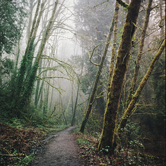 not all those who wander (manyfires) Tags: hasselblad hasselblad500cm mediumformat square analog film trail path hike hiking trees forest woods tryoncreek moss lush verdant fog mist moody landscape oregon pnw pacificnorthwest lakeoswego nature