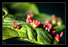 Was ist das? / What is that? (AndreMeyer) Tags: red macro green rot leaf amp 100mm tokina grn blatt andremeyer wwwandremeyerde