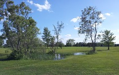 Peace (Joanna Kurowski) Tags: trees water landscape pond peace bluesky greens golfcourse