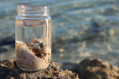 IMG_1167 (Sarah Lots-of-speech) Tags: ocean sea shells water sand jar